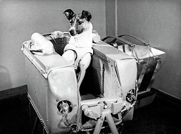 Laika, first dog in space - Sputnik International