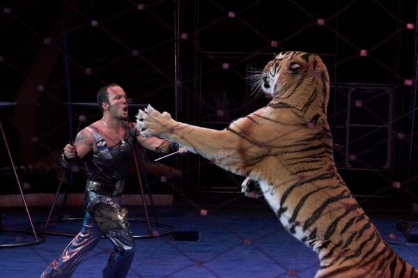 Seven Russian Circus Tigers 'Poisoned by Rivals'         - Sputnik International