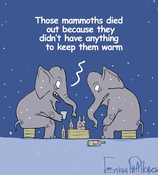 Anything to keep elephants warm! - Sputnik International