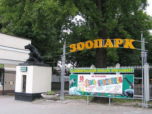 Zoo in Kaliningrad (archive) - Sputnik International