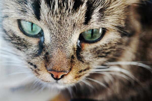 Russian Man Threatens to Kill Grandmother's Cat in Extortion Plot - Sputnik International
