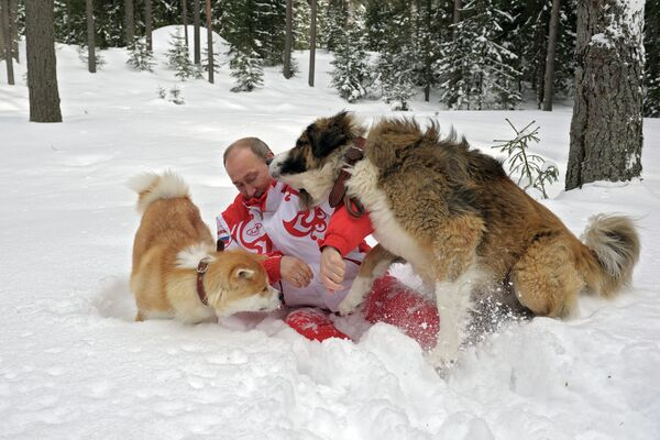 Vladimir Putin Romps in Snowdrifts With His Dogs in the Moscow Region - Sputnik International