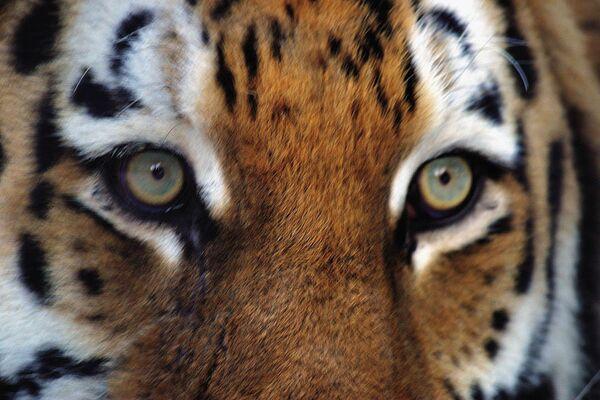 Cairo Protest Sends Zoo Animals Into Panic – Report - Sputnik International