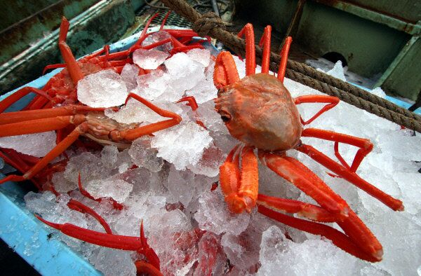 Crabs are seen chilled in Nakhodka, Russia, in 2009. - Sputnik International
