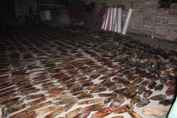 Thousands of rare animal parts, minerals and Siberian mammoth bones - Sputnik International