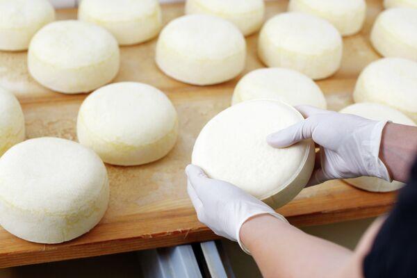 Production of cheese - Sputnik International
