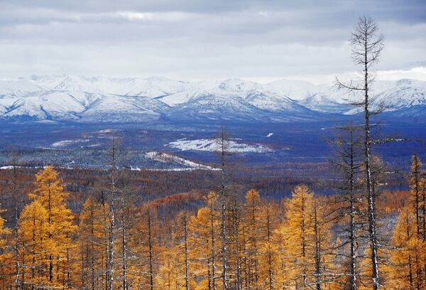Siberian Taiga Woods - Sputnik International