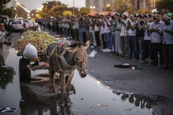 Islamic state militants use donkeys for bombings - Sputnik International